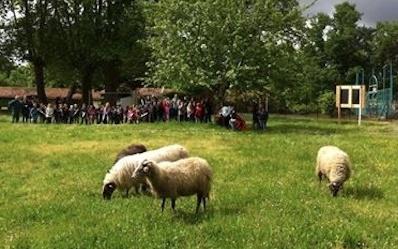 image : Brebis au parc de Nahuques de Mont de Marsan